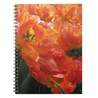 Closeup of orange tulips with droplets in spring notebook