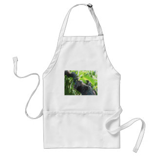 Closeup of peach tree excretion of gummy resin adult apron