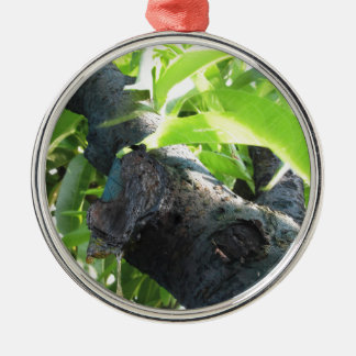 Closeup of peach tree excretion of gummy resin metal ornament
