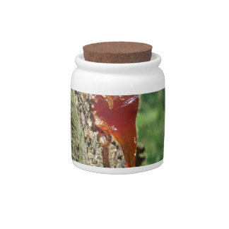 Closeup of pear tree excretion of gummy resin candy jar