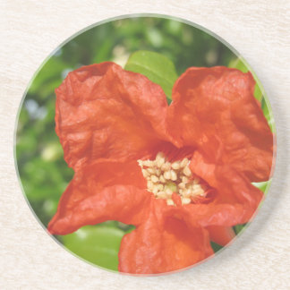 Closeup of red pomegranate flower drink coaster
