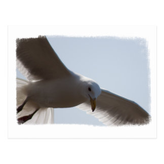 Closeup of seagull flying postcard