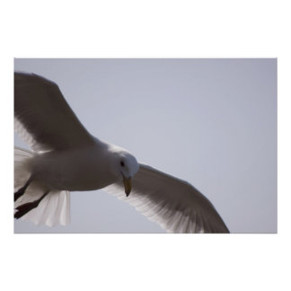 Closeup of seagull flying posters