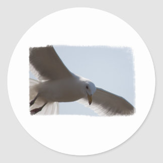 Closeup of seagull flying round stickers
