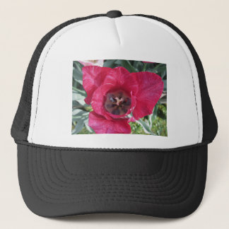 Closeup of streaked tulip with droplets in spring trucker hat