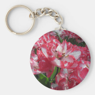 Closeup of streaked tulips with droplets in spring keychain