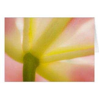 Closeup of tulip petals card