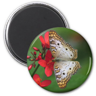 Closeup of white butterfly 2 inch round magnet