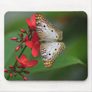 Closeup of white butterfly mouse pad