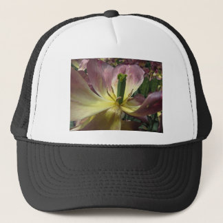 Closeup of yellow and purple tulip in spring trucker hat