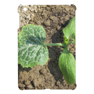 Closeup of young cucumber plant in the garden iPad mini covers
