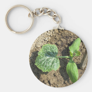Closeup of young cucumber plant in the garden keychain