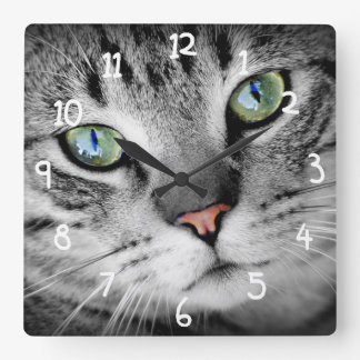 Closeup photo of cat square wall clock