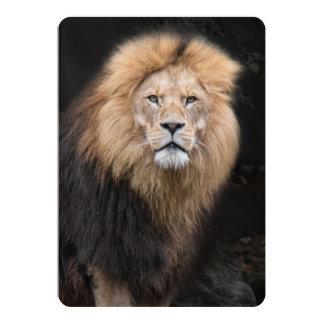 Closeup Portrait of a Male Lion Card