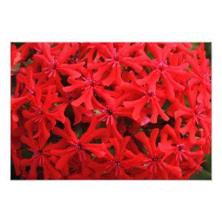 Closeup Red Flowers Photo Art