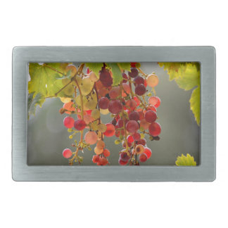 Closeup red grapes among leaves belt buckle
