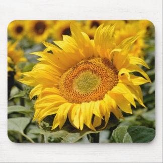 Closeup sunflower mousepad