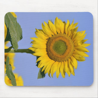Closeup sunflower mouse pads