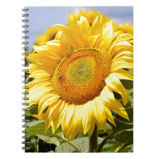 Closeup sunflower spiral note book