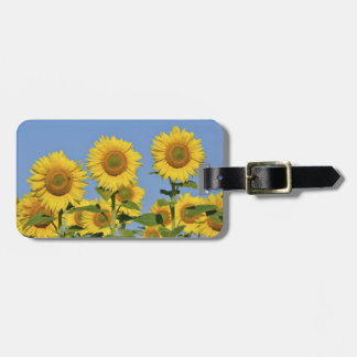 Closeup sunflowers tag for bags