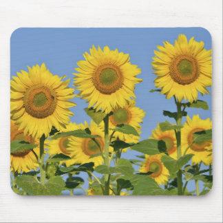 Closeup sunflowers mousepad