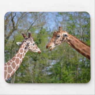 Closeup two giraffes mouse pad