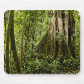 Cloud forest, Bosque de Paz, Costa Rica Mouse Pad