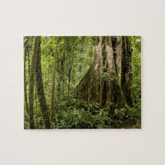Cloud forest, Bosque de Paz, Costa Rica Jigsaw Puzzles