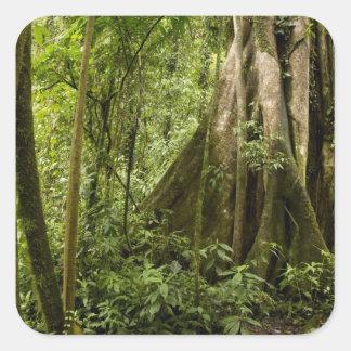 Cloud forest, Bosque de Paz, Costa Rica Square Sticker