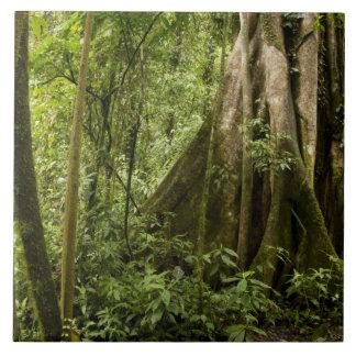 Cloud forest, Bosque de Paz, Costa Rica Tile