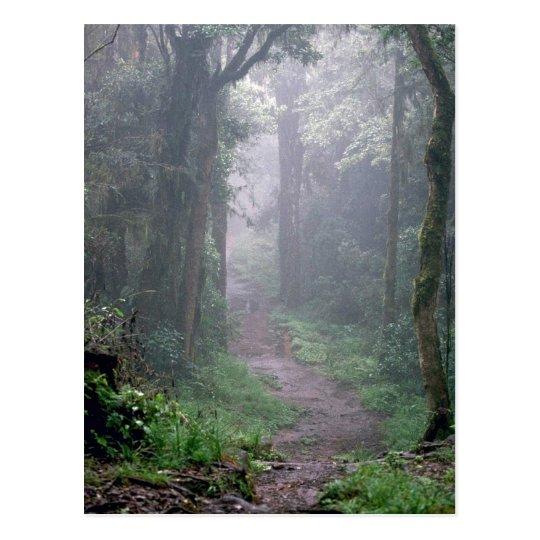 Cloud forest, Mt. Kilimanjaro, Tanzania Postcard