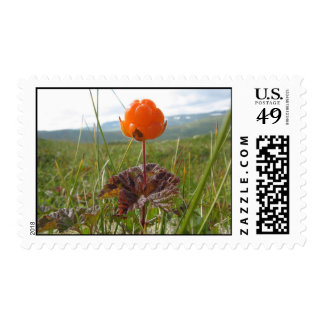 Cloudberry Postage