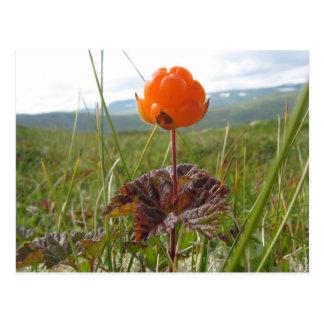 Cloudberry Postcard