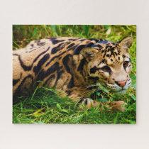 Clouded Leopard Big Cat's. Jigsaw Puzzle