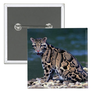 Clouded Leopard-eye contact Button
