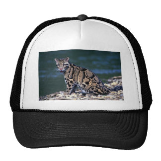Clouded Leopard-eye contact Hat