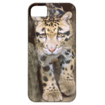 Clouded Leopard iPhone 5 Cover