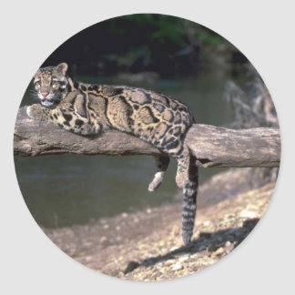 Clouded leopard on log round stickers