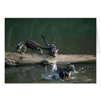 Clouded Leopard-small cub leaping from log to rive Greeting Card