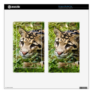 clouded leopard waiting for mom and love decals for kindle fire