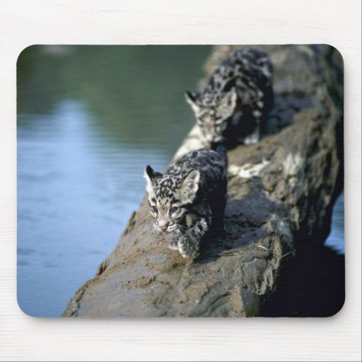Clouded Leopards-small cubs on log in river Mousepad