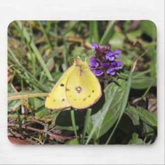 Clouded Sulphur Mouse Pad