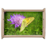 Clouded Yellow Butterfly Serving Tray