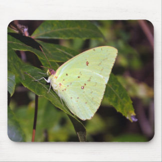 Cloudless Sulphur 02/13 Mouse Pad