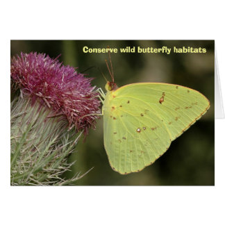 Cloudless Sulphur butterfly, blank greeting card