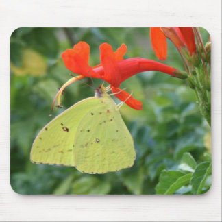Cloudless Sulphur Butterfly Mouse Pad