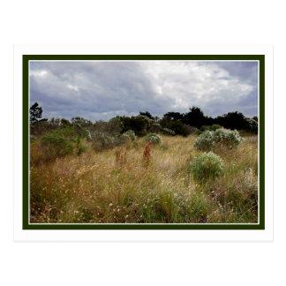 Clouds and Tall Grass Postcard