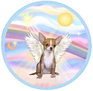 Image result for chihuahua angel