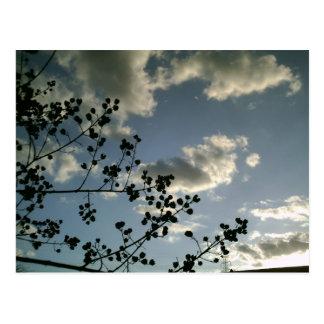 Cloudy Sky Postcards
