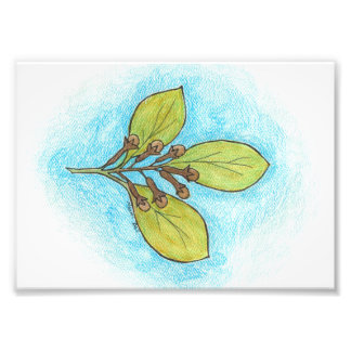 Clove Illustration Photo Print